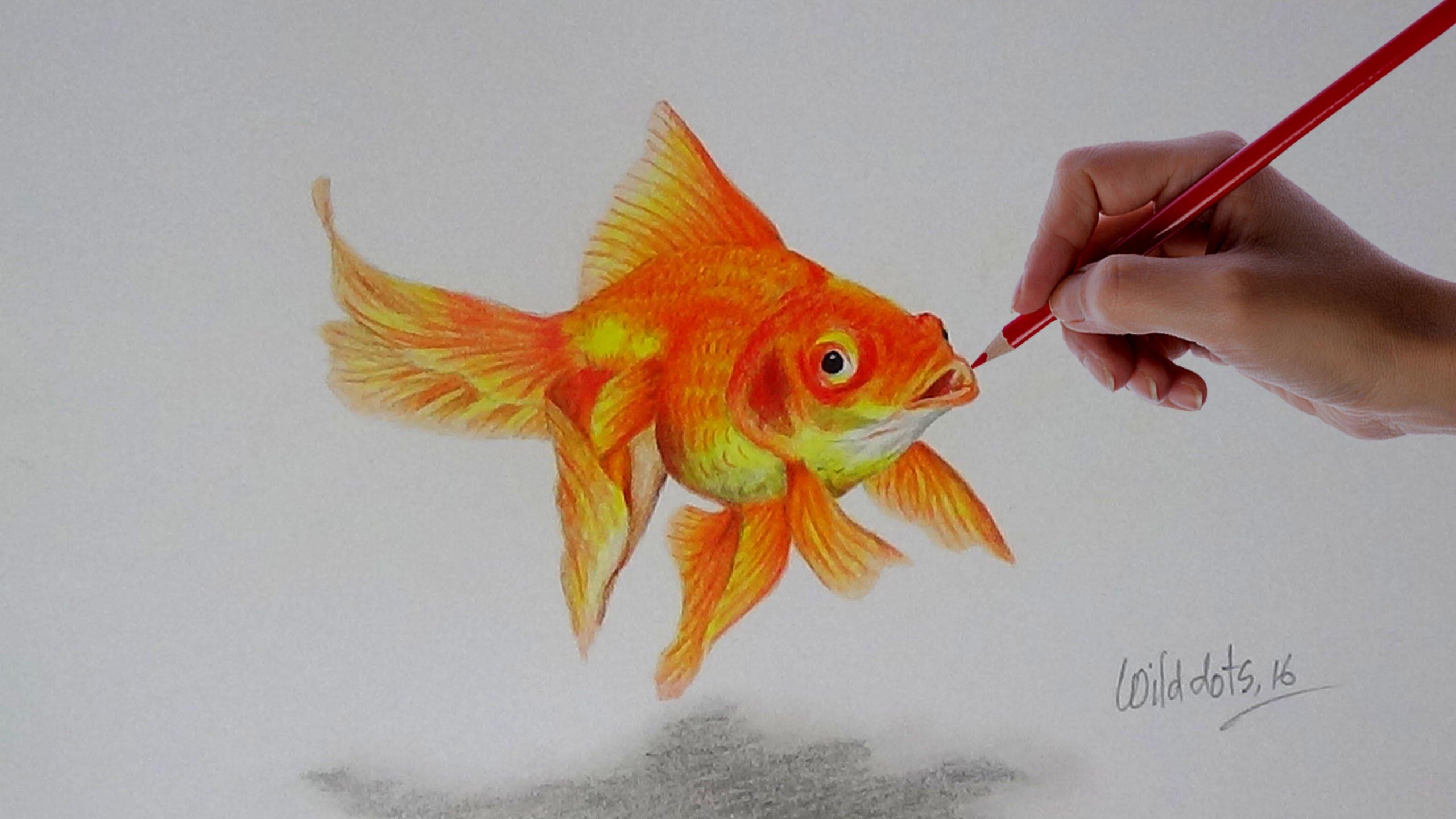 2560x1440 Gold Fish