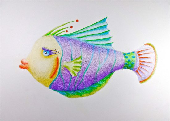 550x393 Grace, Color Pencil Fish Drawing By Karin Phifer