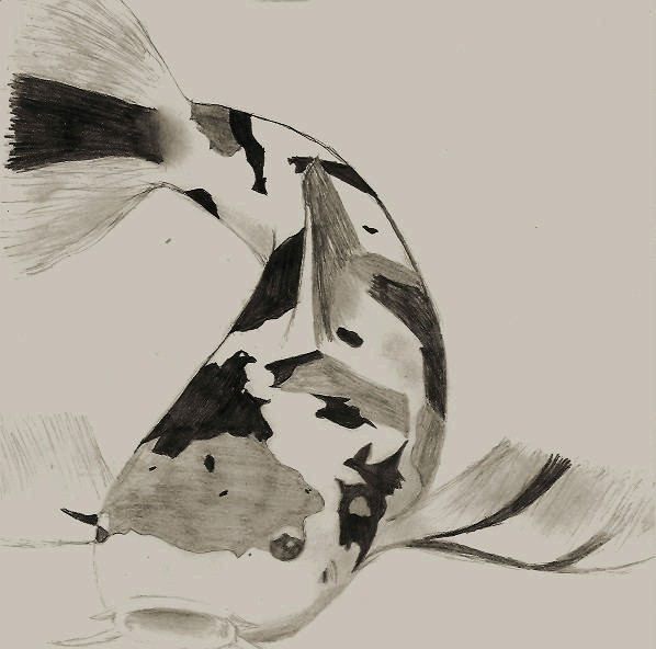 598x592 Koi Fish Pencil Drawing By Coolbeans92