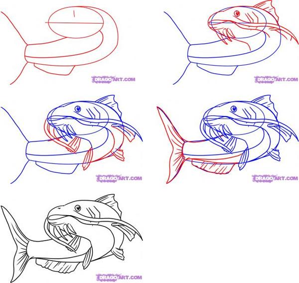 600x568 How To Draw Fish, Draw Fish