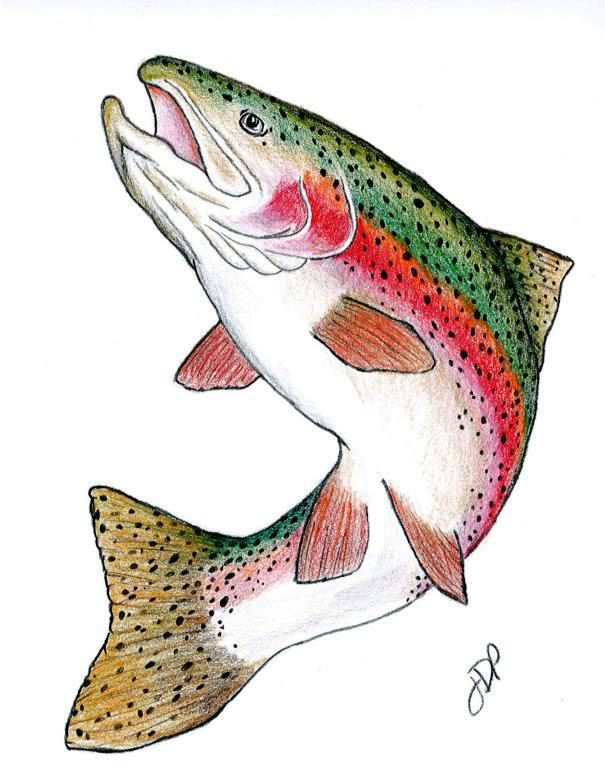 Fish Drawing Template At Getdrawings Free For Personal Use