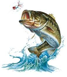 228x264 Image Result For Bass Jumping Out Of Water Cakes
