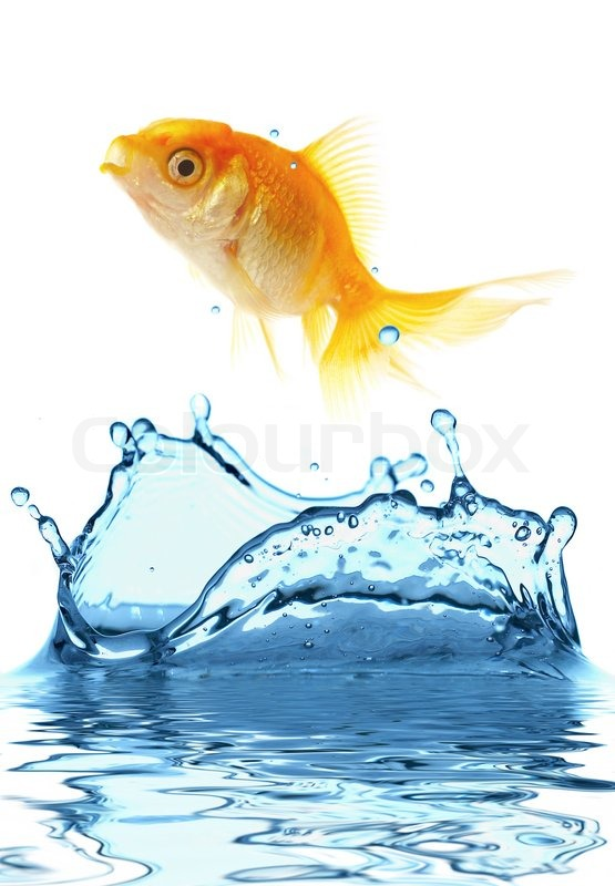555x800 The Gold Small Fish Jumps Out Of Water Stock Photo Colourbox