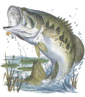 277x318 Bluegill Drawing Sources Been There, Done That Just Because
