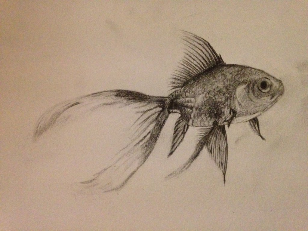 Fish Pencil Drawing at GetDrawings | Free download