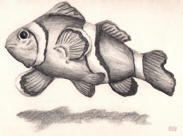 600x449 Clown Fish Sketch Byizuka09