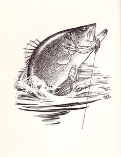 236x306 Fish Trout Sketch Drawing Www.pennylure