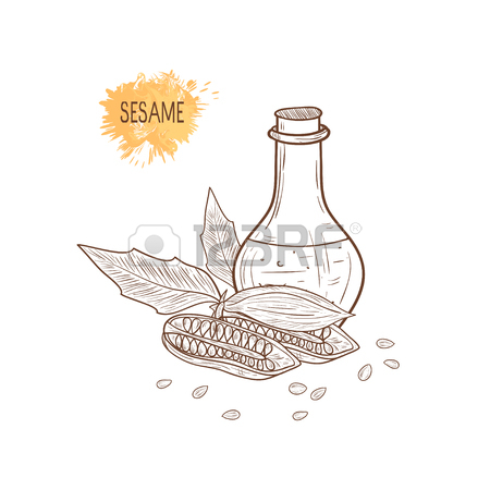 450x450 Sesame Plant And Seeds In Flask Sketch Design Royalty Free