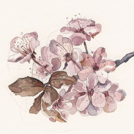 570x570 Cherry Blossom Print