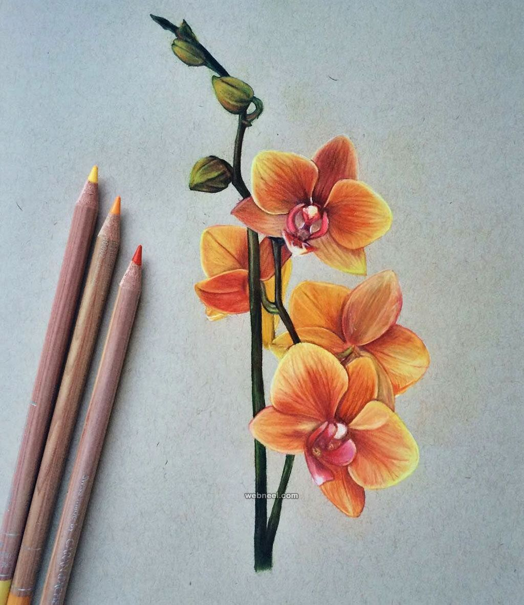 Flower Color Pencil Drawing At GetDrawings