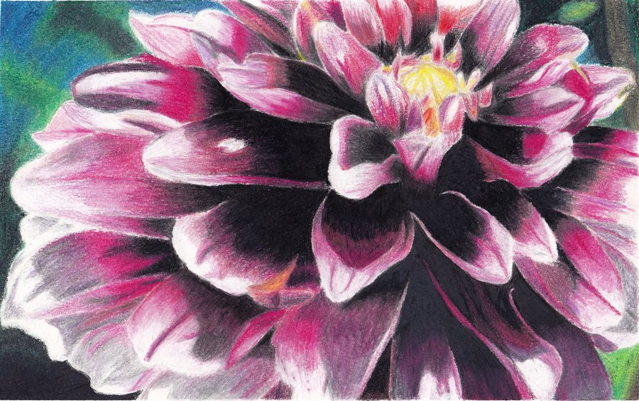 900x565 colored pencil flower by megan renee on deviantart