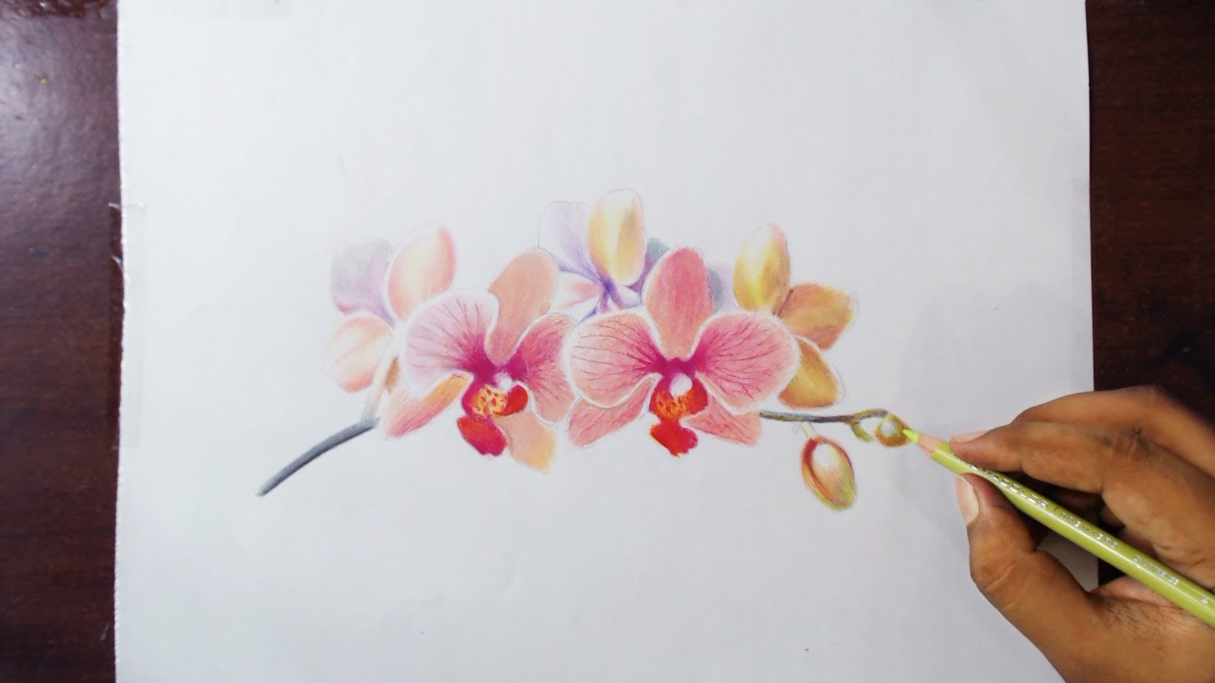 Rose Flower Color Pencil Drawing Flowers Healthy