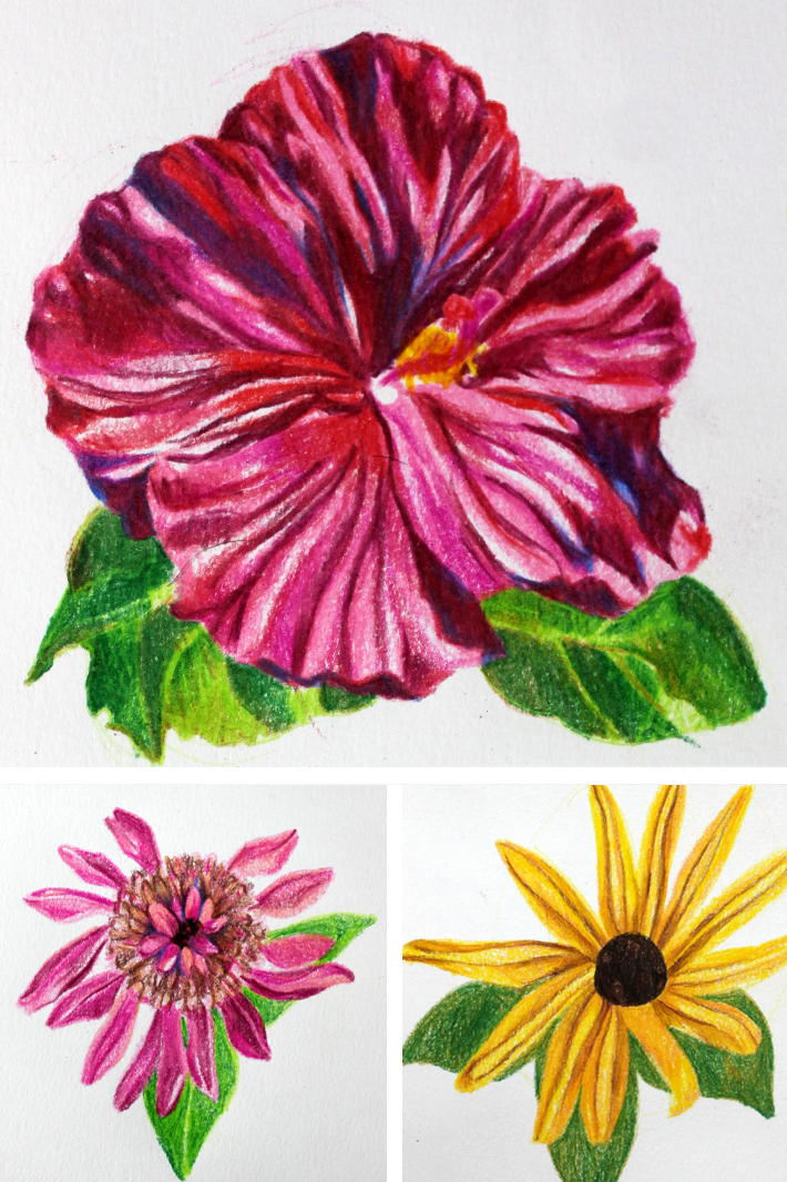 710x1066 Simple Colored Pencil Drawings Drawing Flowers With Colored