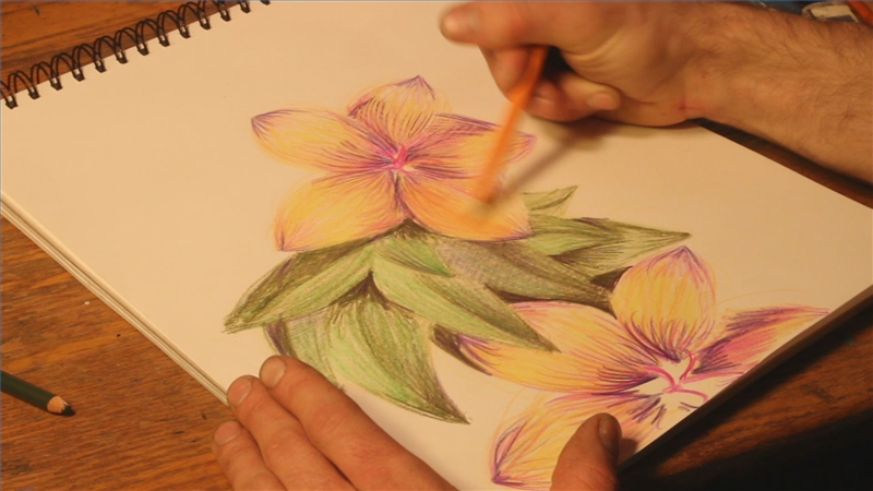 Flower Color Pencil Drawing At Getdrawings Com Free For Personal