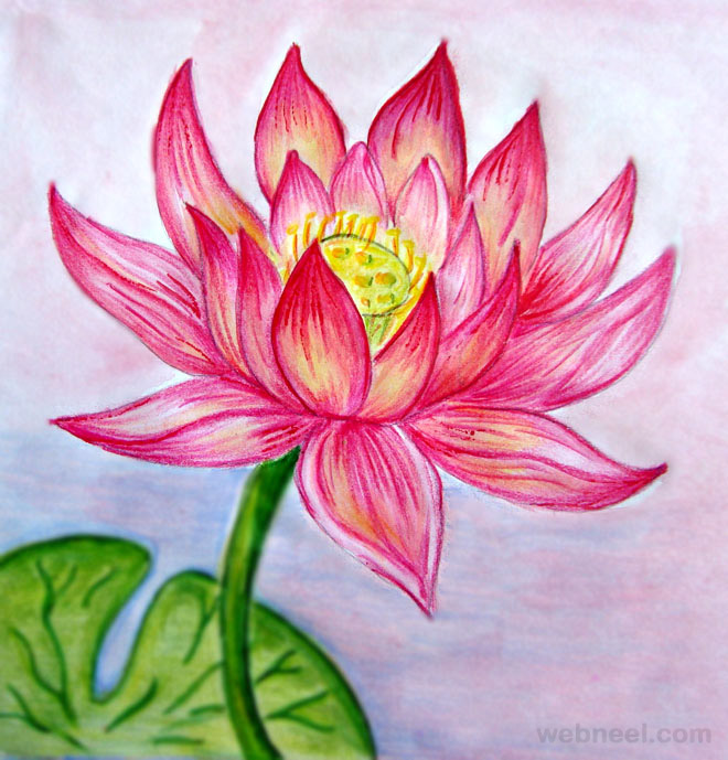 660x689 40 Beautiful Flower Drawings And Realistic Color Pencil Drawings