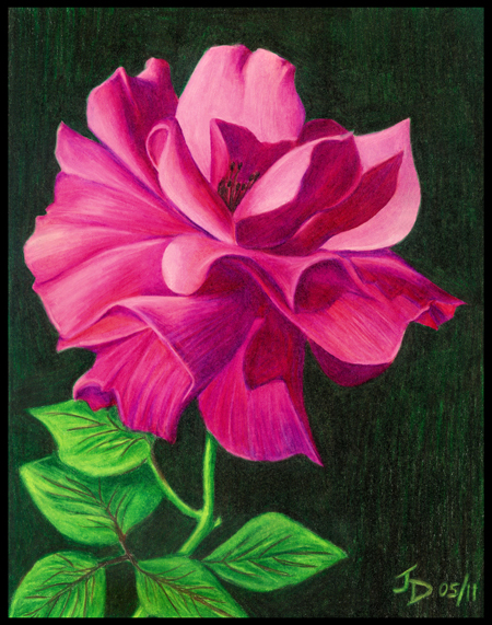 450x571 Flowers Drawings In Colored Pencil