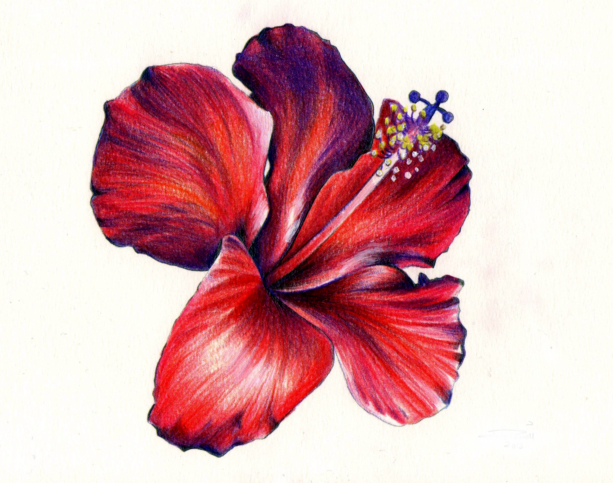 Flower Colour Pencil Drawing at GetDrawings.com | Free for personal ...