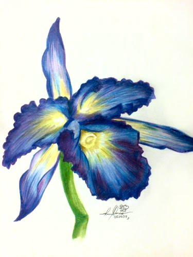 375x500 Flower, Orchid, Colored Pencil Drawing Of Bluepurple Bloom