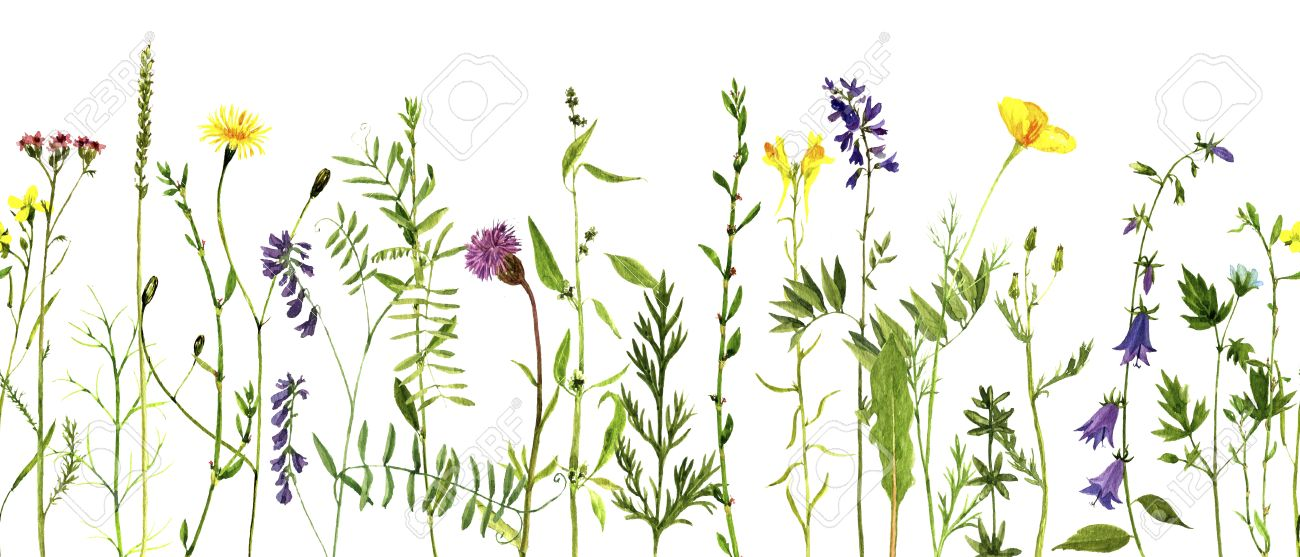 1300x557 Watercolor Drawing Wild Flowers And Herbs, Seamless Decorative