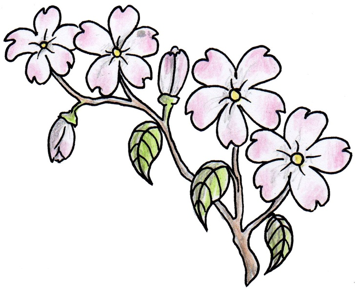 Flower designs drawing at getdrawings free for personal use 736x597 pink flowers drawing 26 cool wallpaper mightylinksfo
