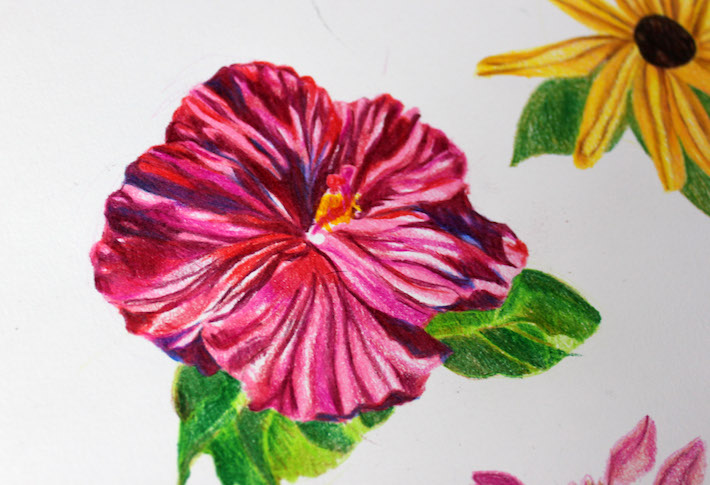 710x485 drawing flowers with colored pencils 5 simple steps