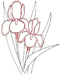 236x301 How To Draw An Iris In 5 Steps Iris, Outlines And Flower