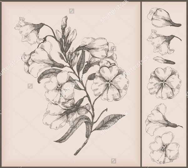 600x536 Beautiful Flower Drawings