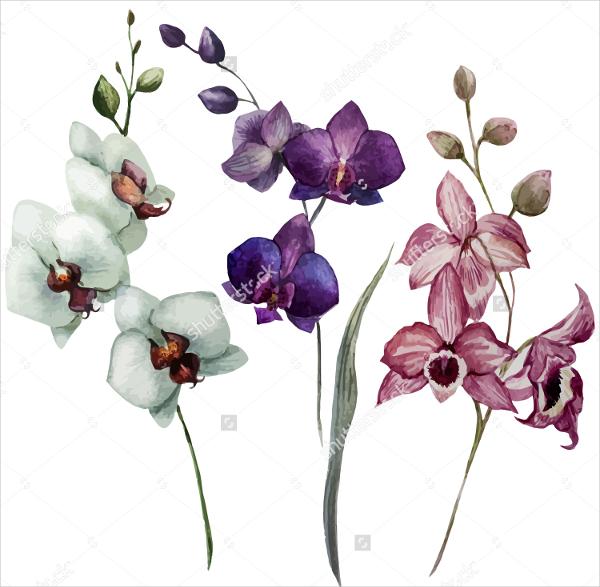 600x587 Flower Drawings