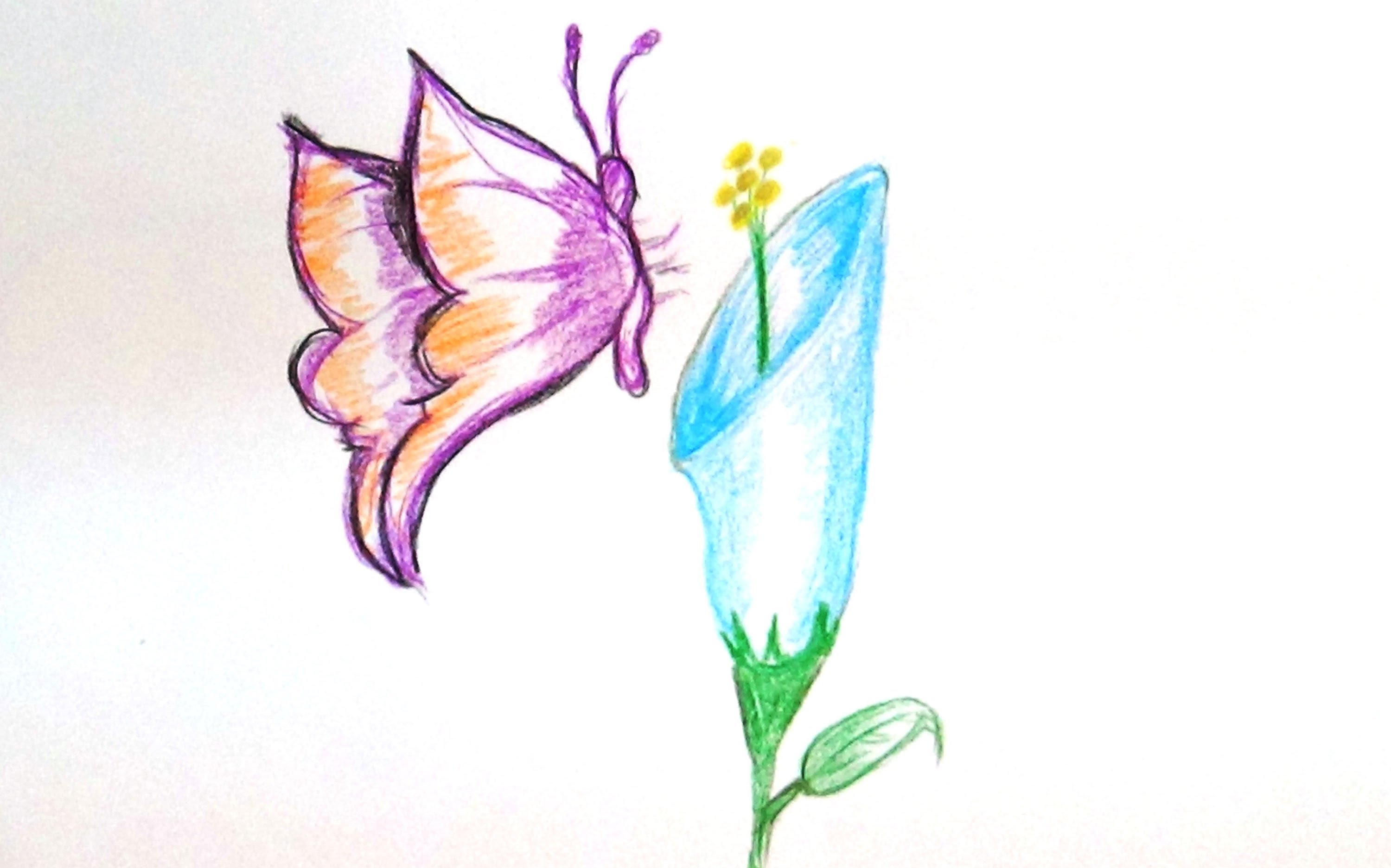 3000x1873 How To Draw A Butterfly Sucking Nectar Of A Flower
