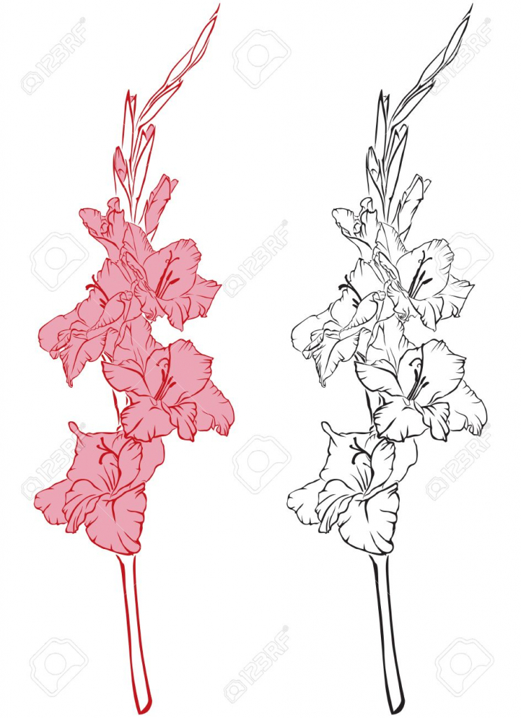 744x1024 Gladiolus Flower Drawing Gladiolus On Vectorstock Drawing