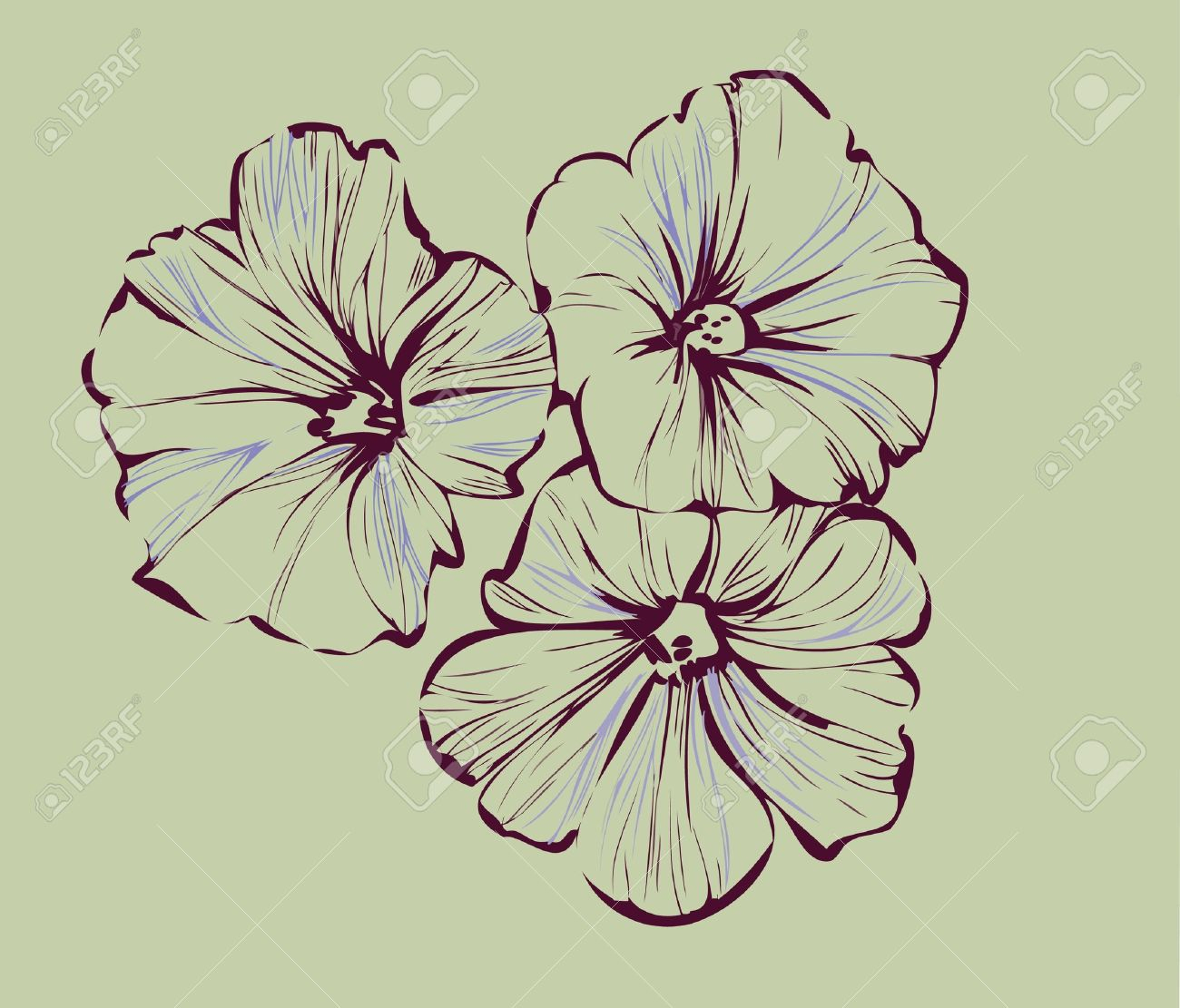 1300x1111 Morning Glory Flower Drawing Morning Glory Botanical Drawings