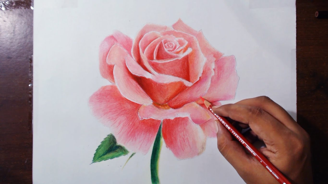 1366x768 Drawing a Rose Flower Drawing Rose