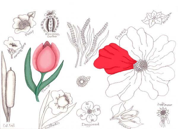 600x436 Flower Drawing Lessons