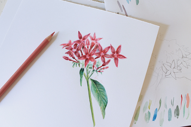 650x433 Mixed Media Flowers Drawing With Color Pencils And Watercolors