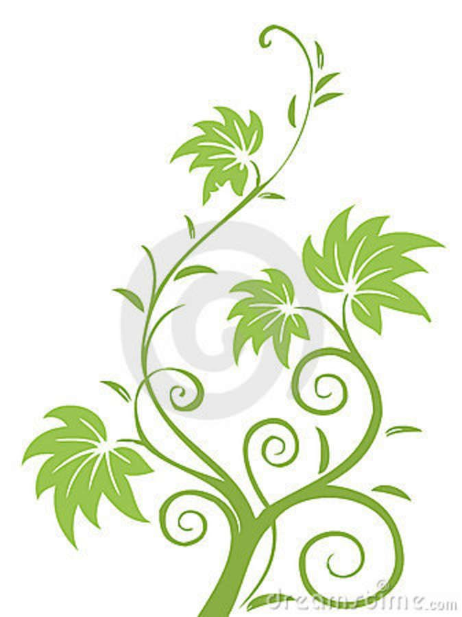 674x900 Drawings Flowers Leaves And Vines Illustration Drawing