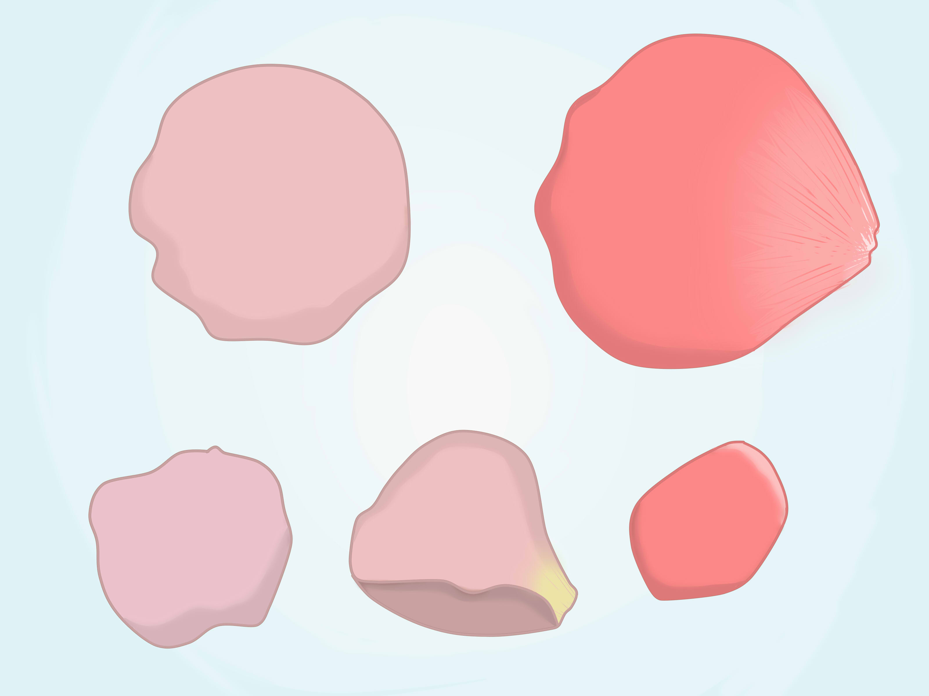 3200x2400 Flower Petals Drawing How To Draw A Rose Petal 6 Steps (With