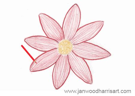 450x320 How To Draw A Daisy