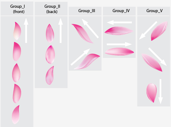 Flower petal drawing at getdrawings free for personal use 550x408 image result for lotus flower petals ref lily pad lotus flower mightylinksfo
