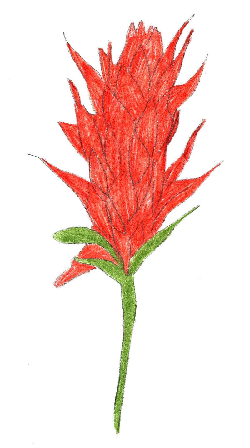Flower Plant Drawing at GetDrawings.com | Free for personal use ...