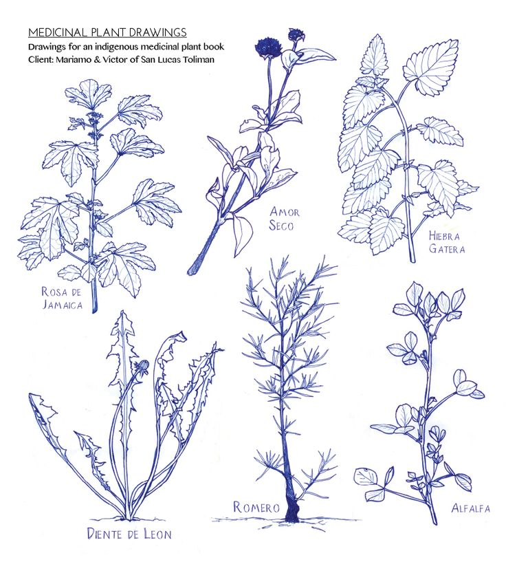 736x817 Plant Drawing Tutorial (Medicinal Plants) Outdoor Spaces