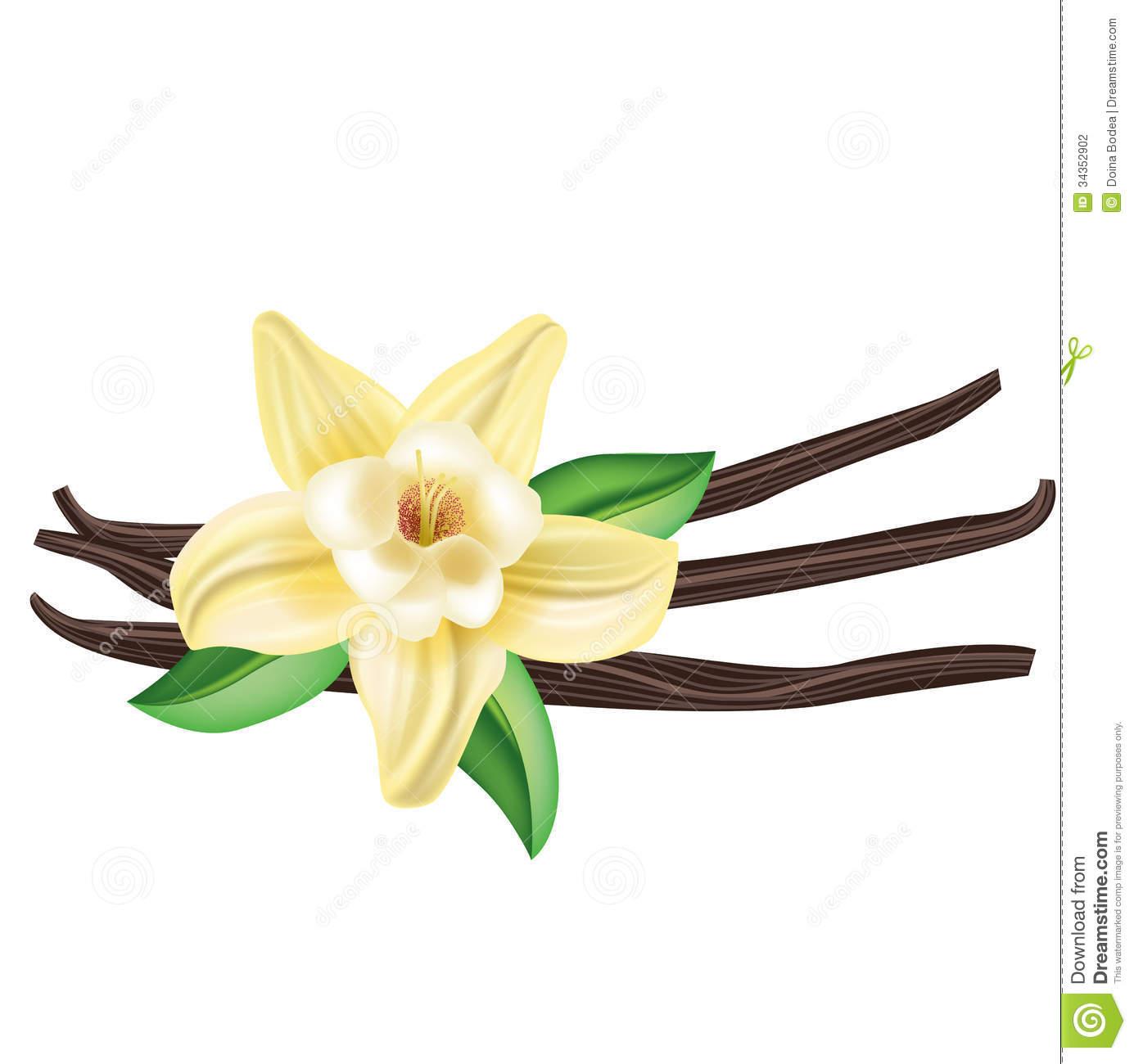1385x1300 Vanilla Clipart Vanilla Flower Drawing Vanilla Bean Flower Odds