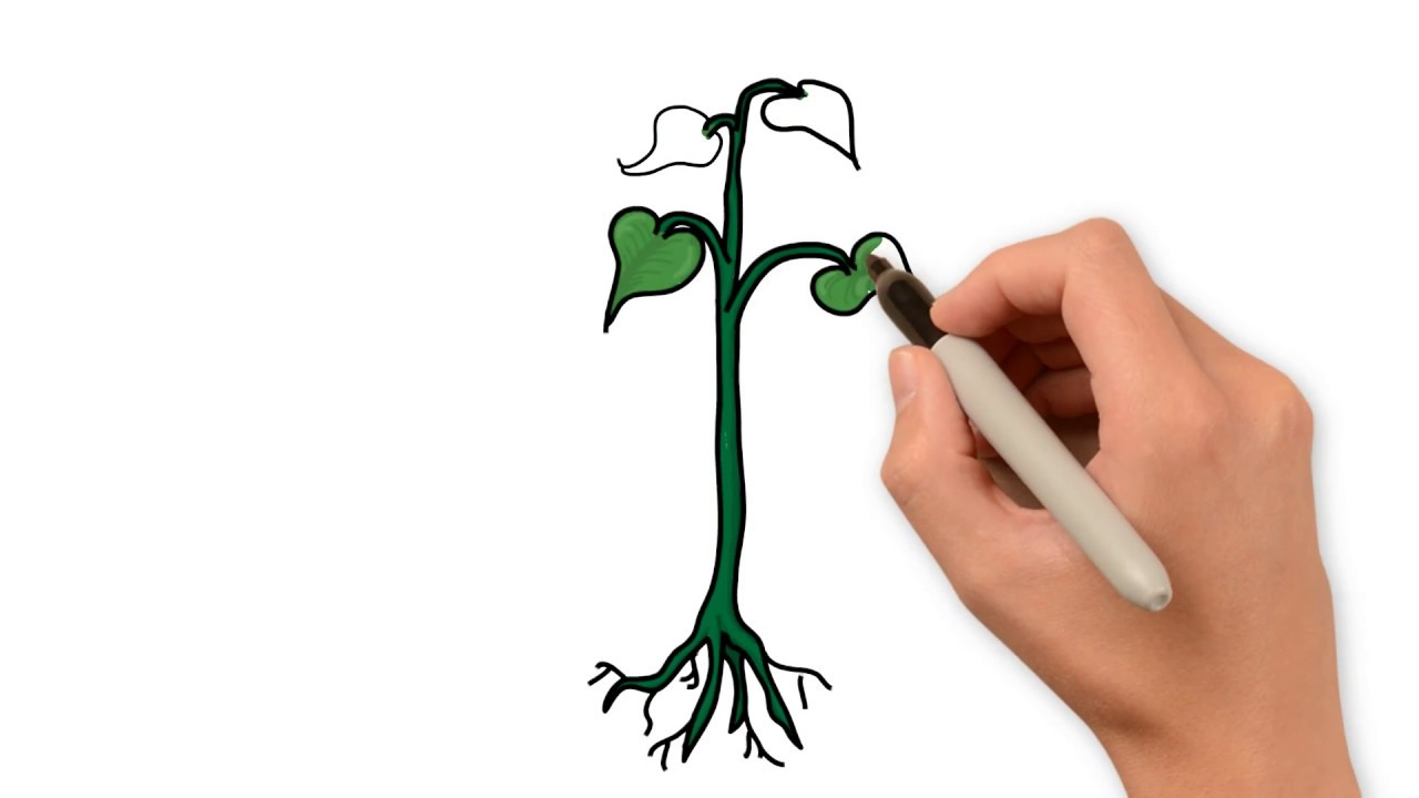1280x720 How To Draw Plant