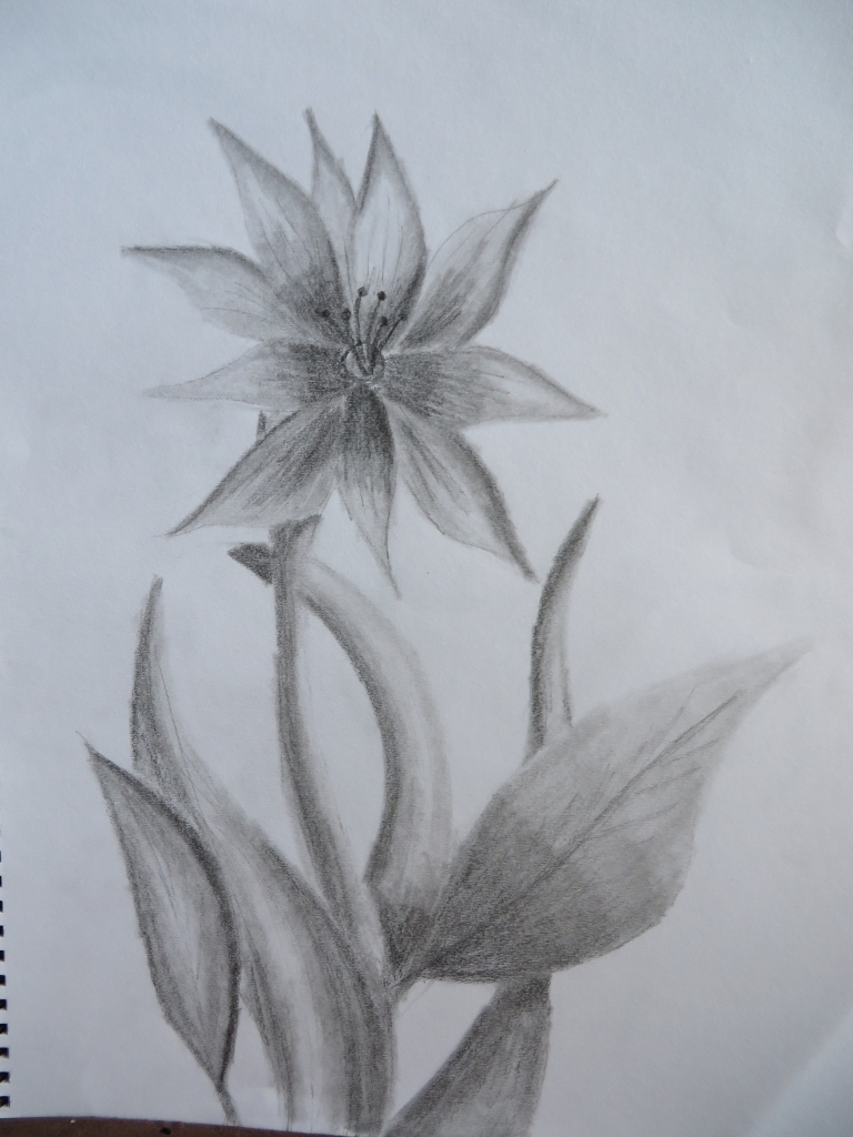 768x1024 Shading Flowers With Pencil Images Pencil Shading Of Flowers