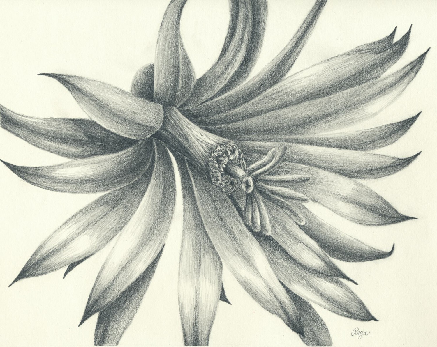 1500x1192 Pencil Artistic Flowers