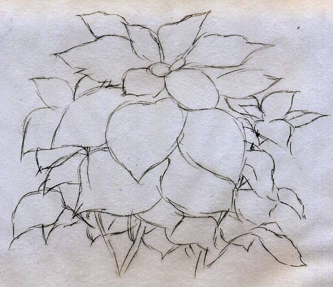 657x568 Quick Poinsettia Flower Sketch