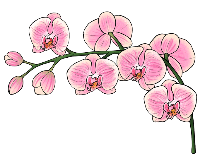 700x540 How To Draw Flowers The Sexy And Sultry Orchid