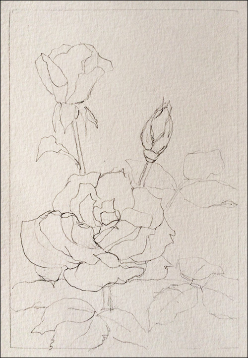 500x722 How To Paint Realistic Watercolor Roses