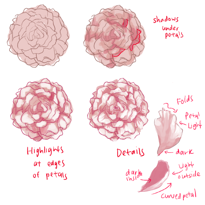 656x655 How To Draw Roses And Peonies Peony, Character Design And Draw