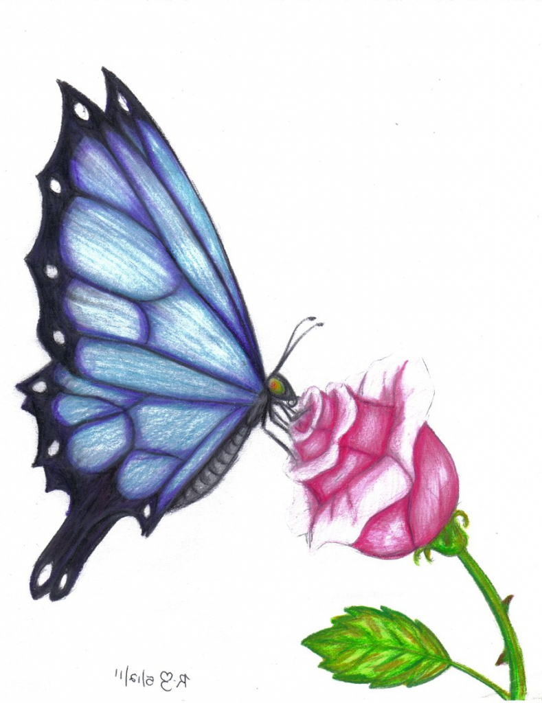 789x1024 Butterfly Sucking Nectar From Flower Drawing Butterfly On Flower