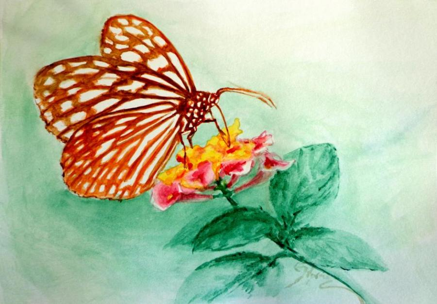 900x627 Butterfly On Flower. Nature. Drawings. Pictures. Drawings Ideas